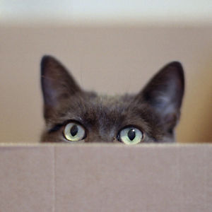 spy_cat.jpg